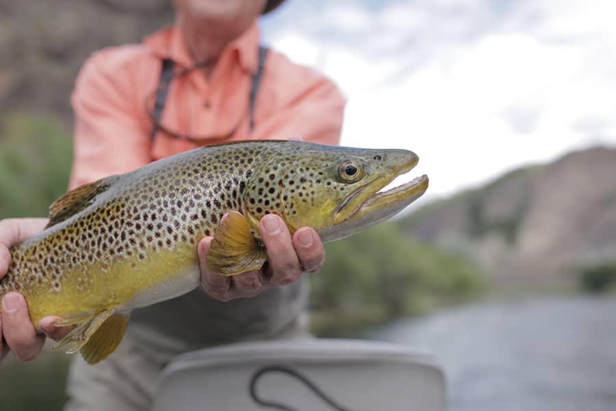 fishing in bozeman montana