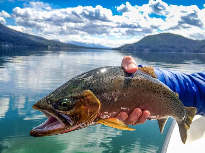Whitefish Lake Fishing